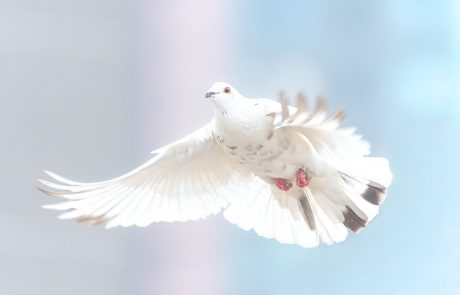 """יונה של שלום / הרב ד""""ר מיכאל לייטמן"""