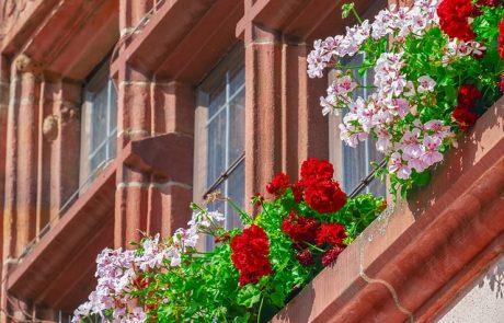 האם כדאי לעצב את הבית עם צמחייה מלאכותית?