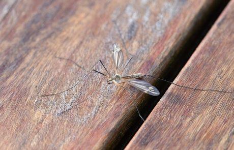 נובמבר כבר כאן, אבל גם היתושים – מה עושים?