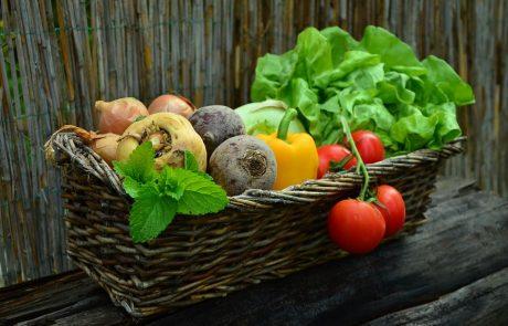 ישראל כמעצמת ירקות
